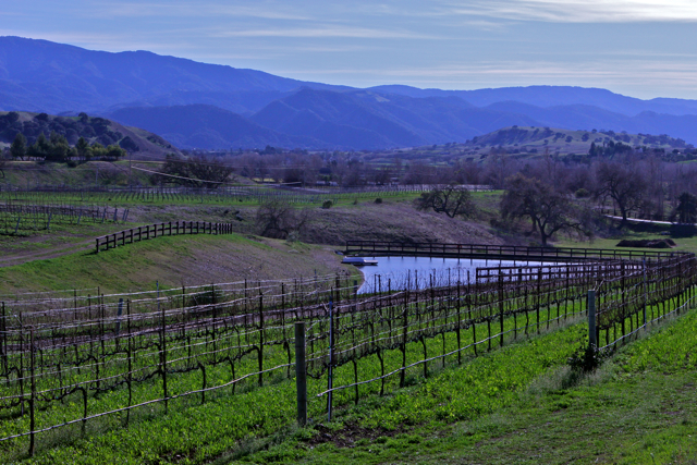 Three Creek Vineyard Pond